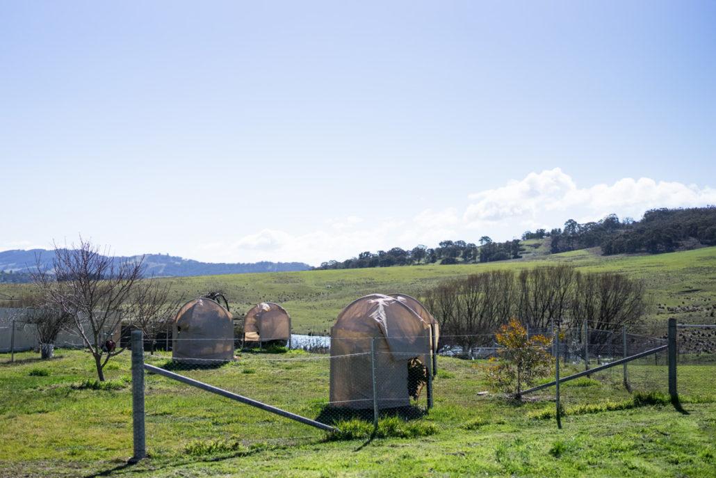Tarago Truffle Farm